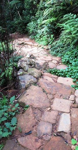 IMG_5321 - Mt Warning path - 270