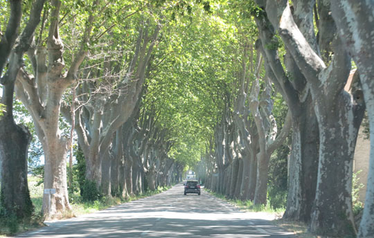 IMG_7695 - tree-lined Provence roads - 540